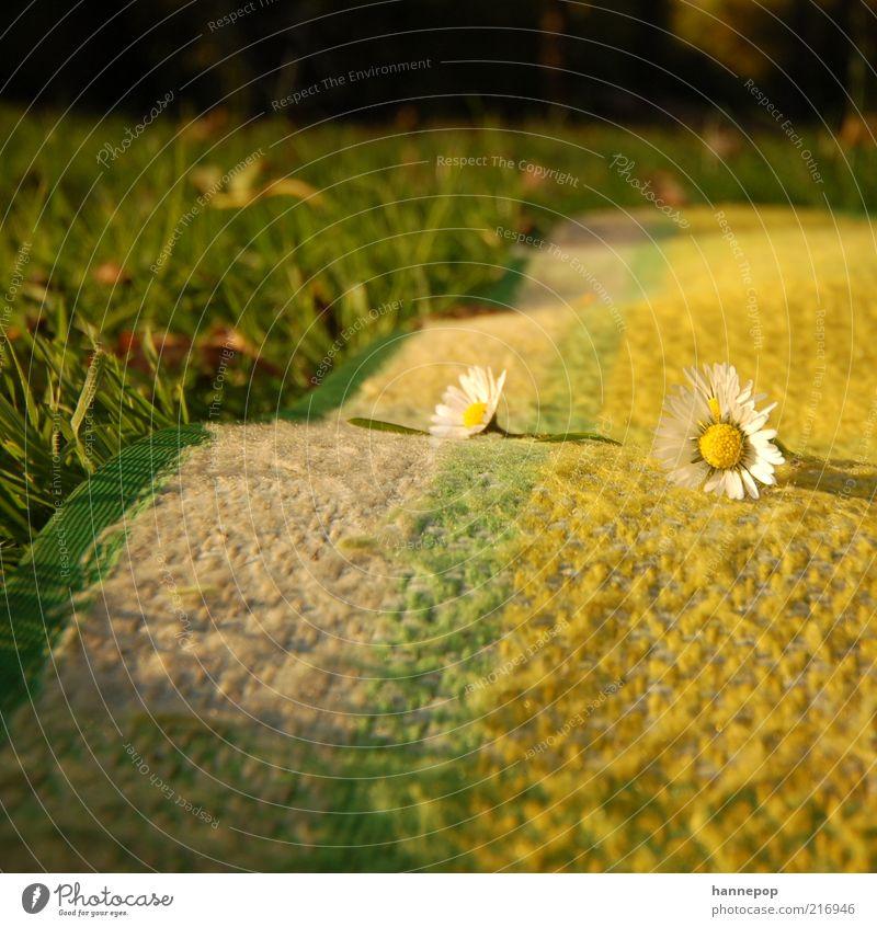 mal wieder bellis Natur grün Pflanze Sonne Blume gelb Erholung Wiese Gras Garten Park Ausflug liegen natürlich einfach Schönes Wetter