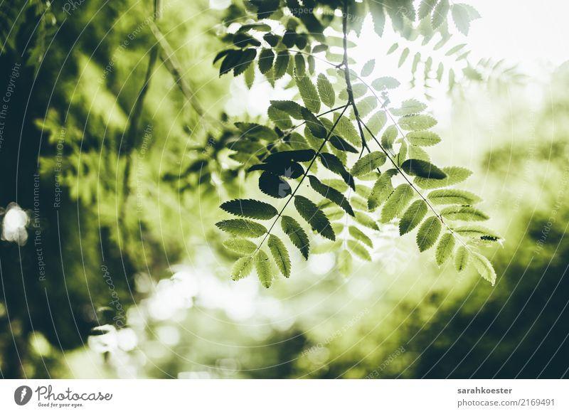Grüne Blätter im Gegenlicht Natur Pflanze Sommer grün Baum Erholung Tier Blatt ruhig Umwelt Herbst Frühling Glück Erde ästhetisch frisch