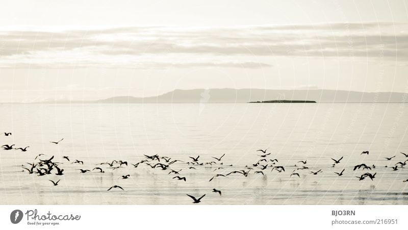 When a day ends like this | Iceland Wasser Himmel weiß Meer Sommer Ferien & Urlaub & Reisen ruhig Tier Ferne Erholung Berge u. Gebirge Freiheit grau Landschaft Zufriedenheit Vogel