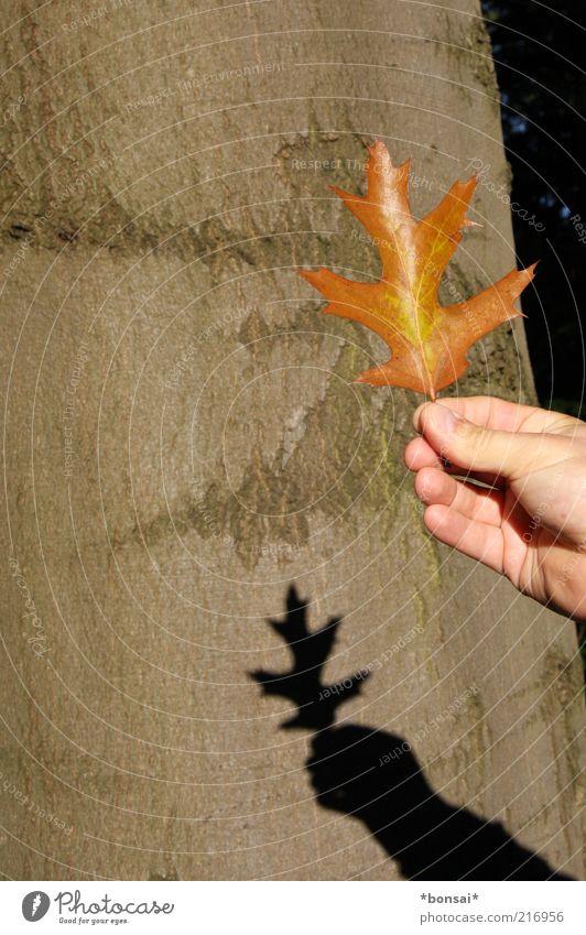 zeig mir den herbst! Hand 1 Mensch Natur Herbst Schönes Wetter Blatt Dekoration & Verzierung alt leuchten dehydrieren natürlich Originalität trocken braun