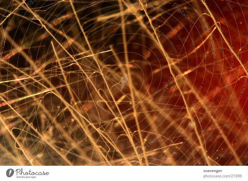 Fasern Stil dünn Makroaufnahme groß fein gelb dunkel schwarz Nahaufnahme Haare & Frisuren hell