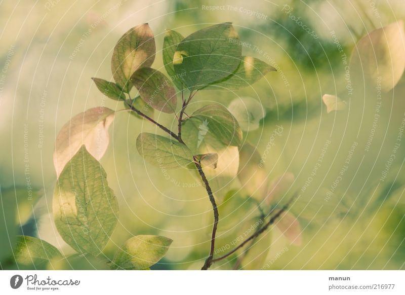 Altrosagrün Natur schön grün Blatt gelb Herbst hell Wachstum Wandel & Veränderung Vergänglichkeit fantastisch natürlich Zweig Herbstlaub Zweige u. Äste herbstlich
