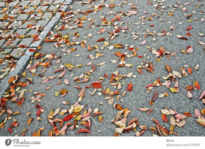 Kehrdienst Umwelt Natur Herbst Klima Wind Blatt Stein mehrfarbig grau Vergänglichkeit Herbstlaub herbstlich Herbstfärbung Bürgersteig Asphalt liegen Bodenbelag