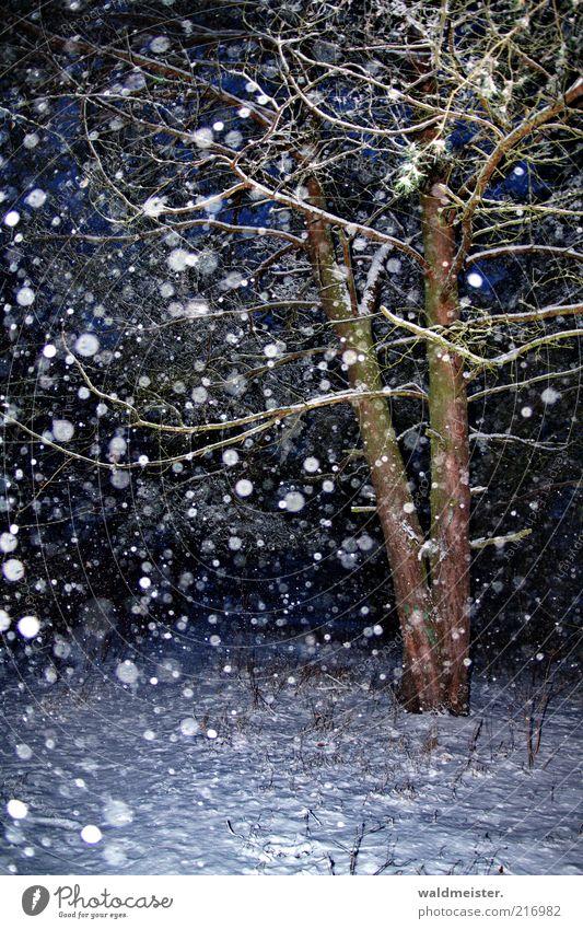 Weihnachtswald Natur Schnee Schneefall Baum Wald blau braun ruhig Schneeflocke Kiefer Farbfoto mehrfarbig Außenaufnahme Abend Nacht Blitzlichtaufnahme Unschärfe