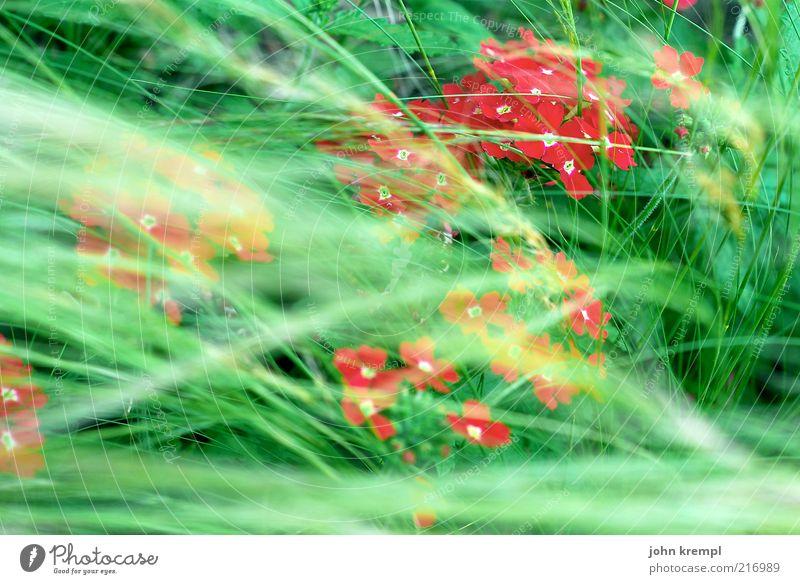 [ZICKENKRIEG] reine mädchensache Natur grün schön rot Pflanze Blume Umwelt Wiese Leben Gras Blüte Zufriedenheit Wind Wachstum Blühend Lebensfreude