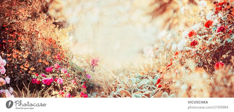 Herbst Hintergrund. Sonniger Tag im Graten Lifestyle Design Sommer Garten Natur Pflanze Sonnenlicht Schönes Wetter Blume Sträucher Blatt Blüte Park retro weich