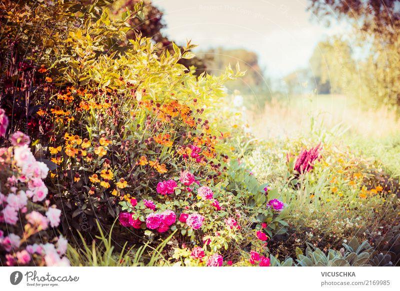 Herbst Garten mit bunte Blumen und Sträucher Lifestyle Design Sommer Natur Landschaft Pflanze Gras Park gelb Astern mehrfarbig Blatt Schönes Wetter