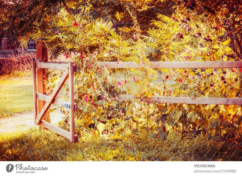 Zaun und Tor in einem Herbstgarten Lifestyle Design Sommer Garten Natur Landschaft Pflanze Baum Blume Gras Sträucher Blatt Blüte Park gelb fence schön Farbfoto