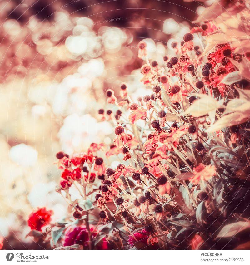 Herbt Blumen Lifestyle Design Sommer Garten Natur Pflanze Herbst Gras Blüte Park gelb rosa herbstlich Unschärfe Schönes Wetter Farbfoto Außenaufnahme
