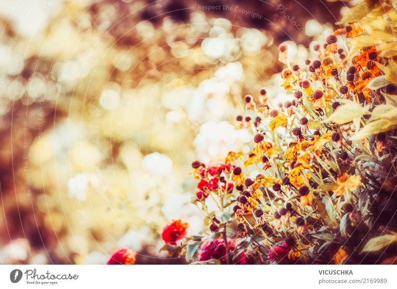 Schöner Herbst im Blumen Garten Lifestyle Sommer Natur Pflanze Schönes Wetter Blatt Blüte Park Wiese gelb schön Unschärfe Sonnenlicht Farbfoto Außenaufnahme