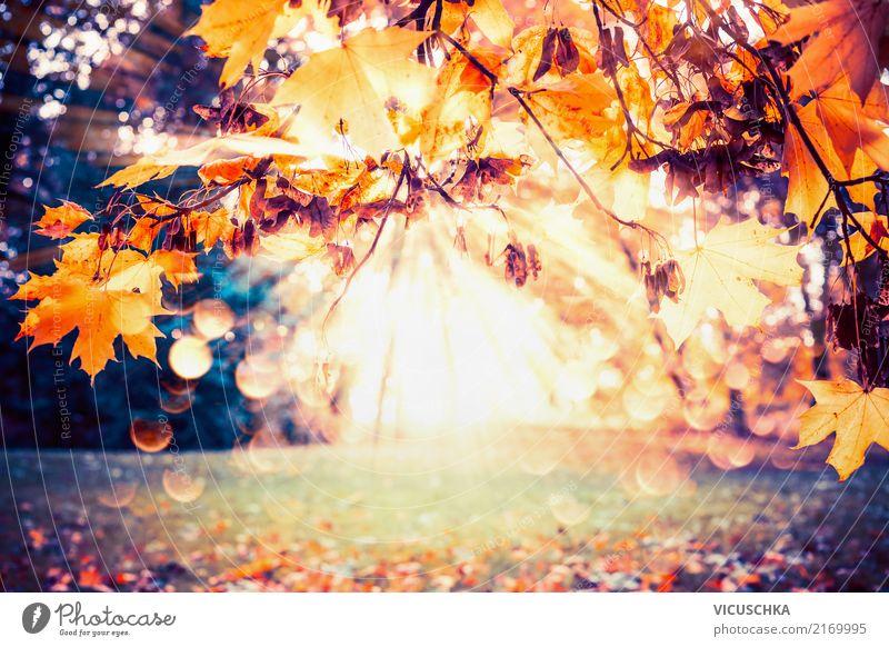 Herbst Hintergrund mit Laub und Sonnenstrahlen Lifestyle Garten Natur Pflanze Sonnenlicht Schönes Wetter Baum Sträucher Blatt Park gelb Hintergrundbild Oktober