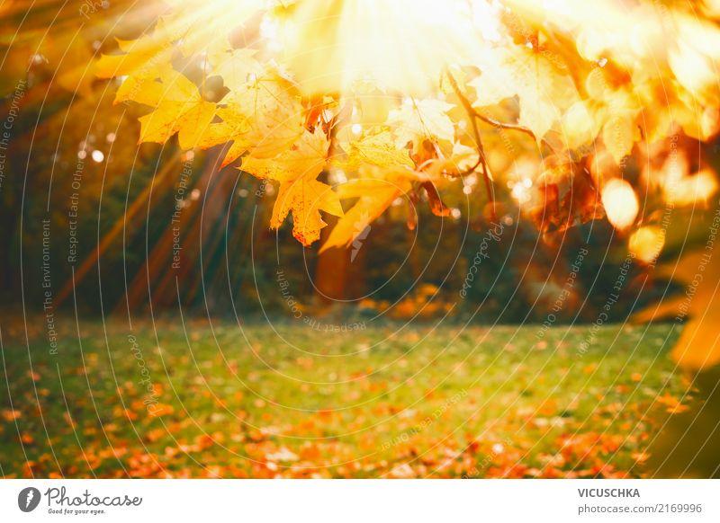Herbst Natur Hintergrund mit Laub und Sonnenschein Lifestyle Garten Pflanze Schönes Wetter Baum Gras Park gelb Hintergrundbild Blatt Rasen Außenaufnahme