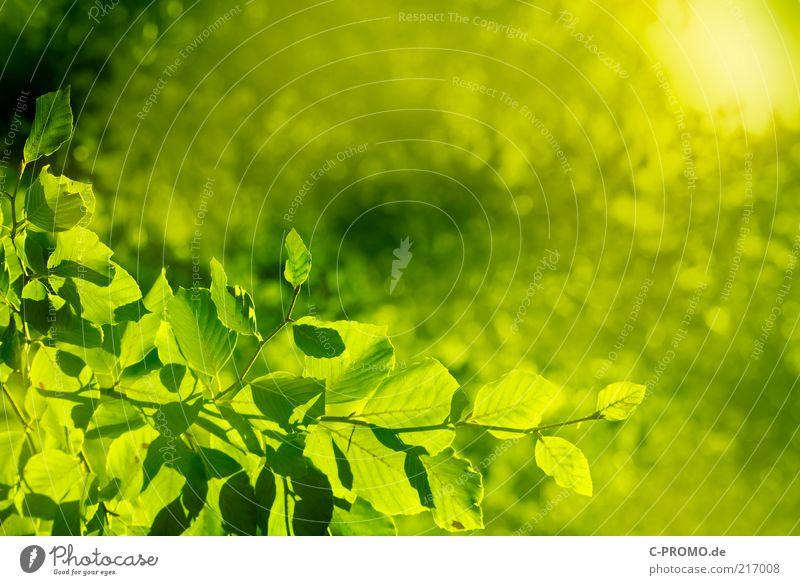 Sommersonne Natur Baum grün Blatt Wald Leben Frühling Wärme hell Umwelt Wachstum Zweige u. Äste vitalisierend