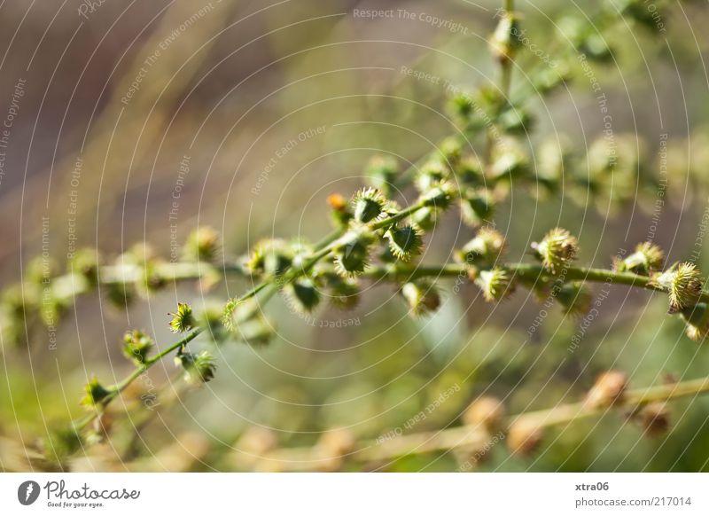 grün in scharf-unscharf Natur Pflanze Umwelt ästhetisch Sträucher Querformat