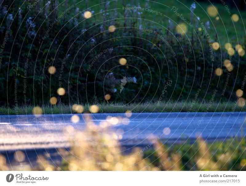 fliegentanz Umwelt Natur Pflanze Tier Herbst Insekt Schwarm leuchten blau gelb gold Straßenrand Lichtpunkt Lichtfleck Schweben Landstraße Blendenfleck