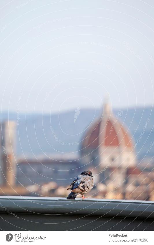 #A# Firenze Kunst ästhetisch Florenz Städtereise Kuppeldach Tourist Italien Sommerurlaub Ausflugsziel Dach Geländer Taube Überblick Aussicht Farbfoto