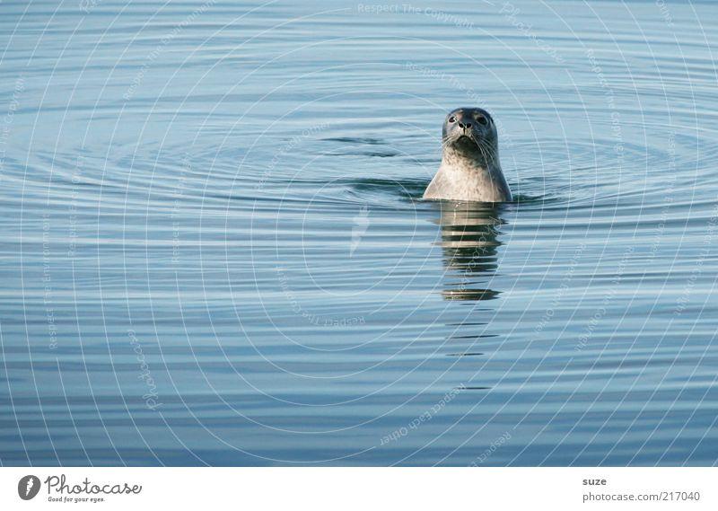 Watt, Interferenzen? Wo? Natur blau Wasser Meer Tier lustig Kopf außergewöhnlich Wellen wild Wildtier authentisch niedlich beobachten Neugier Tiergesicht