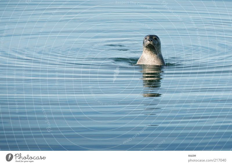 Watt, Interferenzen? Wo? Natur Tier Wasser Wellen Meer Wildtier Tiergesicht 1 beobachten Blick authentisch außergewöhnlich lustig niedlich wild blau Neugier