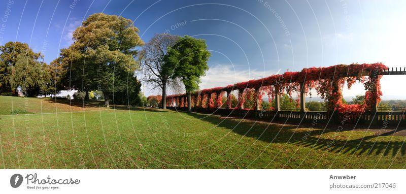 Herbstpanorama Kasseler Weinberg-Park Umwelt Natur Landschaft Pflanze Himmel Klima Wetter Schönes Wetter Baum Gras Sträucher Wiese Hessen Deutschland