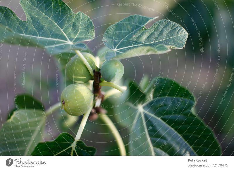 #A# Feige für Feige Kunst ästhetisch Feigenblatt Feigenbaum mediterran reif lecker grün Grünpflanze ökologisch Bioprodukte Biologische Landwirtschaft Italien