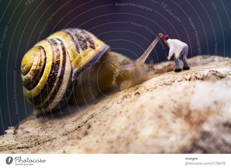 Minielten - Hey, du da! Haus sprechen Mensch maskulin Mann Erwachsene 1 Tier Wildtier Schnecke braun gelb Spirale Schneckenhaus Figur Fühler bücken langsam