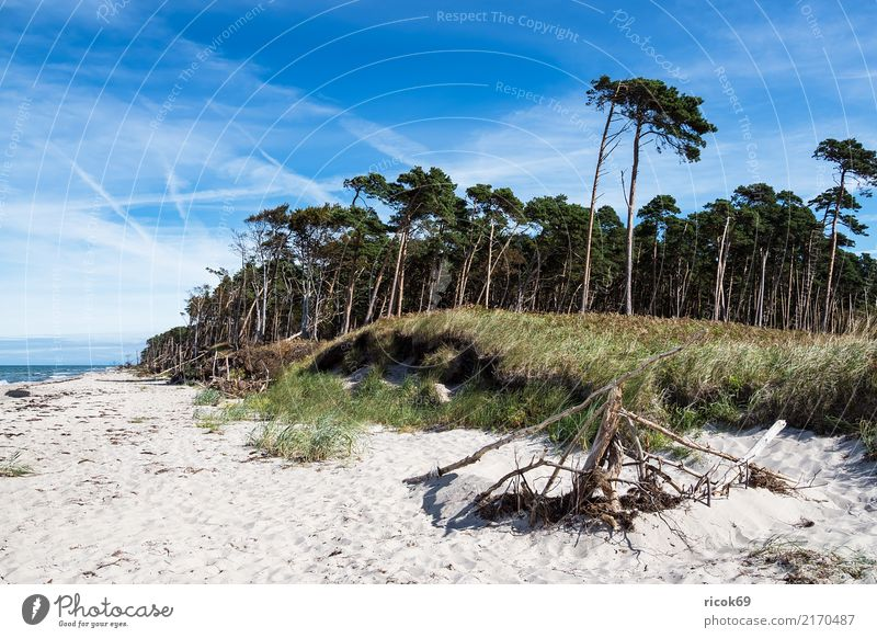 Der Weststrand auf dem Fischland-Darß Erholung Ferien & Urlaub & Reisen Tourismus Strand Meer Wellen Natur Landschaft Wolken Baum Wald Küste Ostsee blau grün