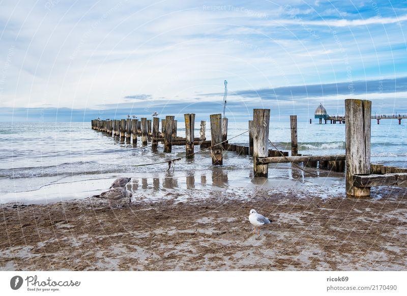 Buhnen am Strand von Zingst Erholung Ferien & Urlaub & Reisen Tourismus Meer Wellen Natur Landschaft Wasser Wolken Wetter Küste Ostsee blau Idylle