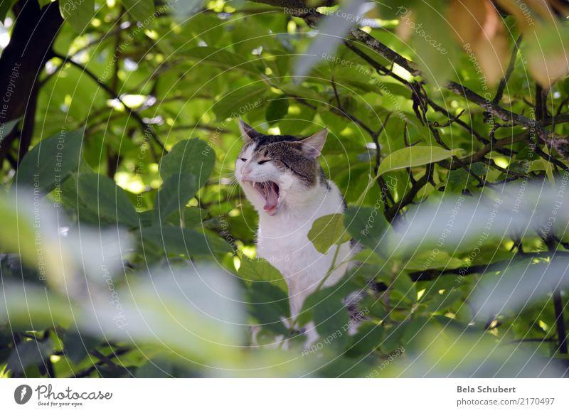 Kati gähnt Katze Tier ruhig Freude Holz Glück Zufriedenheit Kraft authentisch Fröhlichkeit Abenteuer Lebensfreude weich Macht Unendlichkeit Höhenangst