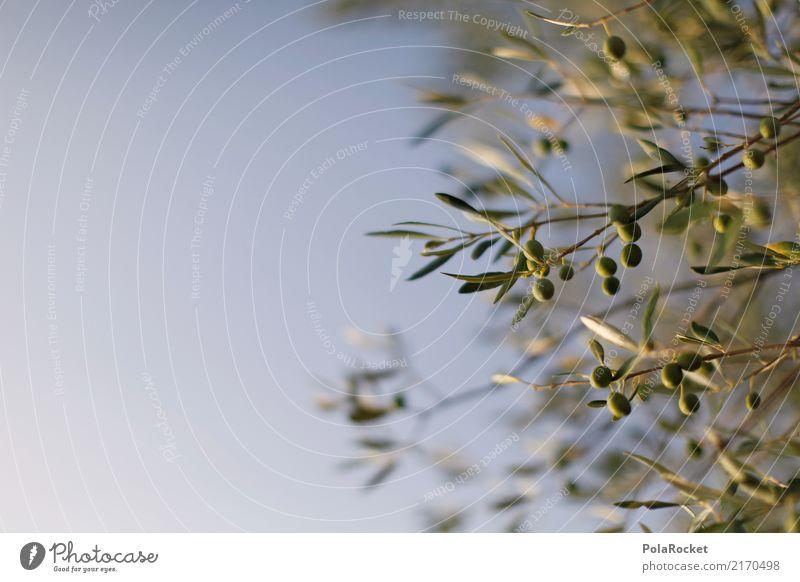 #A# Oliven im Chianti Natur ästhetisch Olivenbaum Olivenöl Olivenhain Olivenblatt Olivenernte mediterran Himmel grün Italien Sommerurlaub dezent Farbfoto