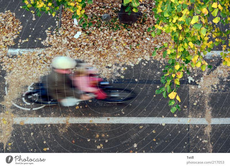 0,32s durch den Herbst Mensch Kind Baum Blatt Straße Bewegung Fahrrad maskulin Geschwindigkeit fahren unten Verkehrswege Dynamik Fahrzeug Fahrradfahren