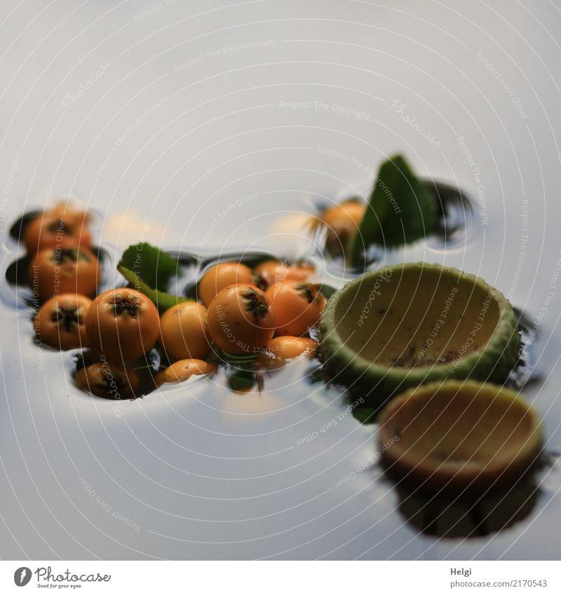 eingetaucht ... Umwelt Natur Pflanze Wasser Herbst Blatt Wildpflanze Beeren Vogelbeeren Park Schwimmen & Baden außergewöhnlich klein nass natürlich rund braun