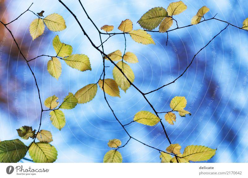 Herbst II Umwelt Natur Landschaft Pflanze Tier Himmel Frühling Sommer Baum Sträucher Blatt Blüte Grünpflanze Garten Park Wiese Feld Wald beobachten leuchten