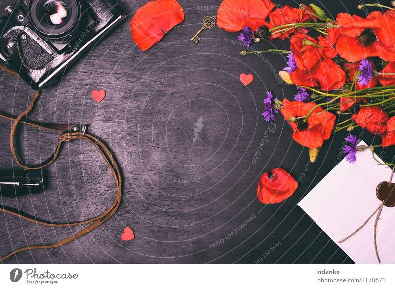 alte Vintage Fotokamera schön Sommer Natur Pflanze Blume Blatt Blüte Blumenstrauß natürlich retro wild grün rot schwarz Farbe Filmmaterial Gerät altehrwürdig