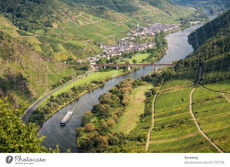 An der Mosel... Ferien & Urlaub & Reisen Tourismus Ausflug Natur Landschaft Pflanze Wasser Sommer Schönes Wetter Baum Sträucher Hügel Fluss
