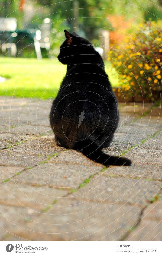 träumen Natur Sonne grün schwarz Tier Katze Denken frei sitzen beobachten entdecken Schönes Wetter Haustier Pflastersteine Hauskatze