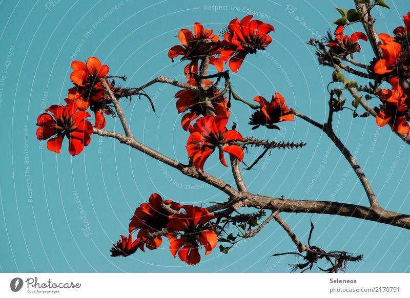 Frühlingsbote Umwelt Natur Pflanze Baum Blüte exotisch Geäst Garten Park Blühend Farbfoto Außenaufnahme Kontrast