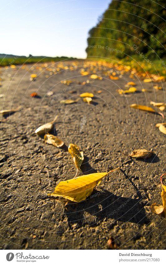 Herbst-Perspektive eines Zwerges Natur grün Baum Pflanze Blatt Ferne Landschaft gelb Wege & Pfade braun Erde liegen Wandel & Veränderung Schönes Wetter