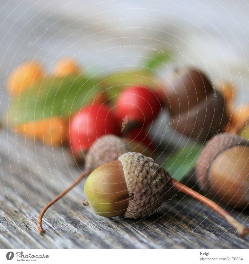 Festplatte(-tafel) | für Vögel und Eichhörnchen Umwelt Natur Pflanze Herbst Blatt Frucht Beeren Eicheln Hagebutten Feuerdorn Park Holz liegen klein natürlich