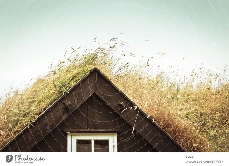 Voll Grass Himmel Natur Haus Umwelt Fenster Wiese Gras lustig natürlich Wohnung Wachstum verrückt Häusliches Leben Schönes Wetter Dach trocken