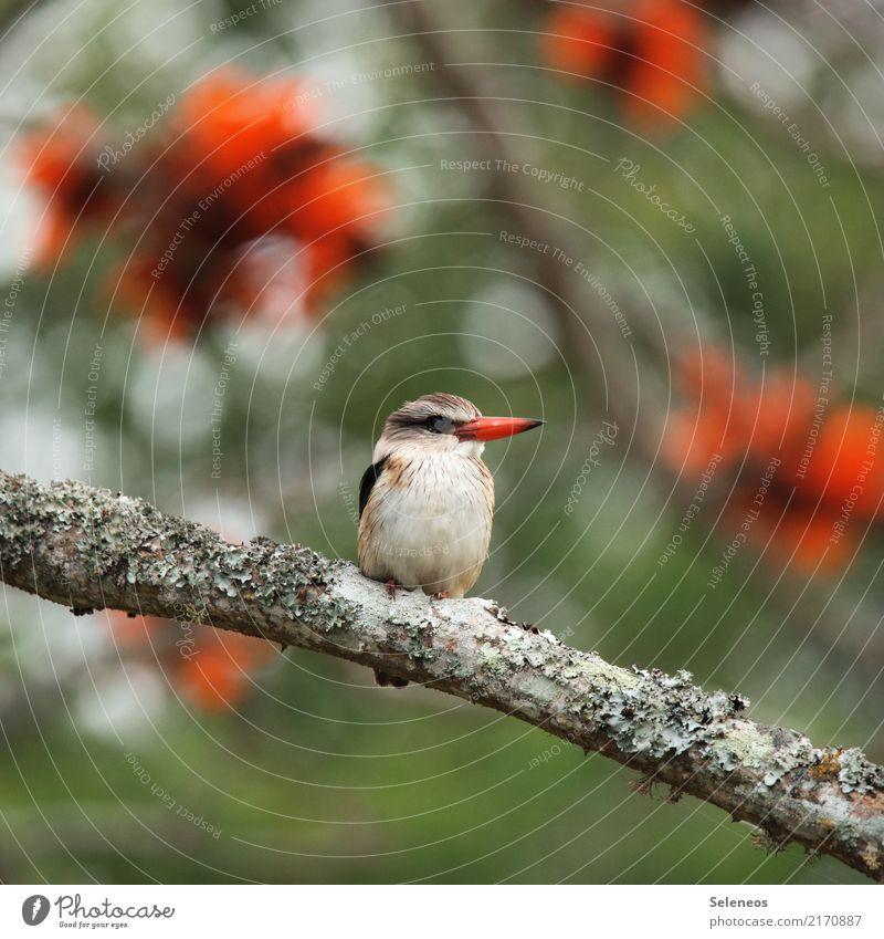 Besetzer Natur Pflanze Sommer Baum Tier Ferne Umwelt Blüte Frühling natürlich Garten Freiheit Vogel Ausflug Park Wildtier