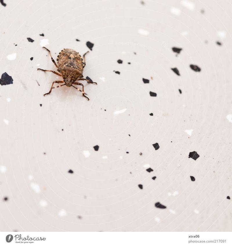 letztens auf unserem balkon Tier 1 Käfer Insekt Boden Farbfoto Außenaufnahme Nahaufnahme Detailaufnahme Textfreiraum unten krabbeln