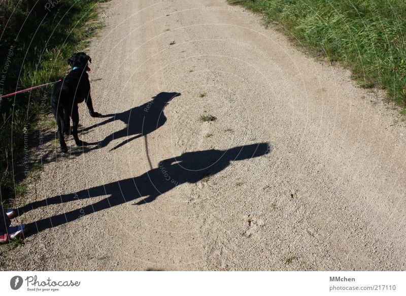 Wohin führt Dich Dein Weg? Mensch Kind Sommer Tier Hund Wege & Pfade warten Fußweg Schönes Wetter geduldig stagnierend unterwegs Schattenspiel