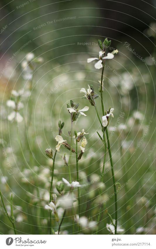 Sommergrüße Natur schön weiß Blume grün Pflanze Sommer schwarz Wiese Herbst Blüte Gras Umwelt Sträucher Stengel