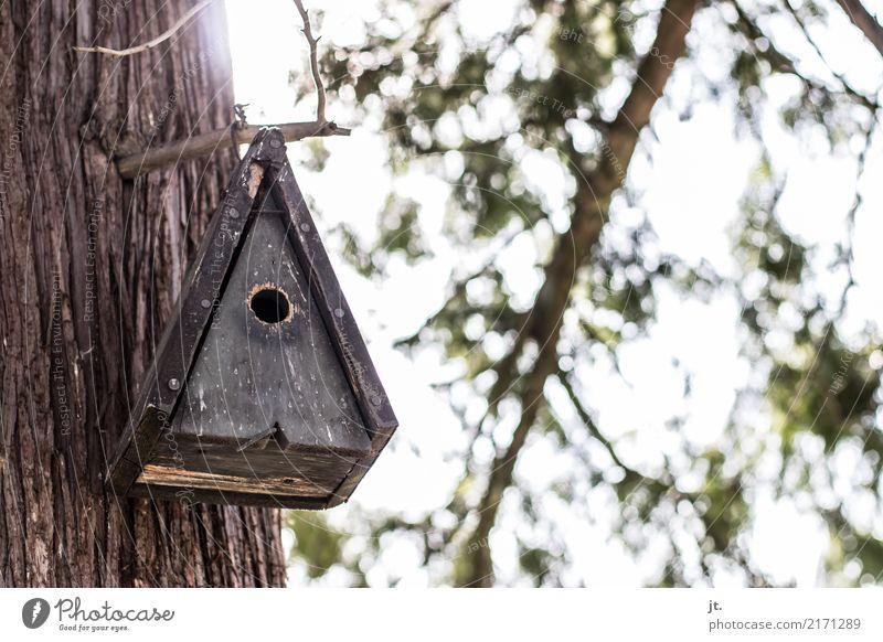 Vogelhäuschen Himmel Natur Pflanze grün weiß Sonne Baum Tier Wald Umwelt braun fliegen Park Schönes Wetter Schutz