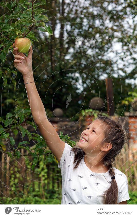 Apfelernte 3 Lebensmittel Ernährung Erntedankfest Landwirtschaft Forstwirtschaft Mädchen Umwelt Natur Herbst natürlich Glück Frucht Obstbaum pflücken Farbfoto