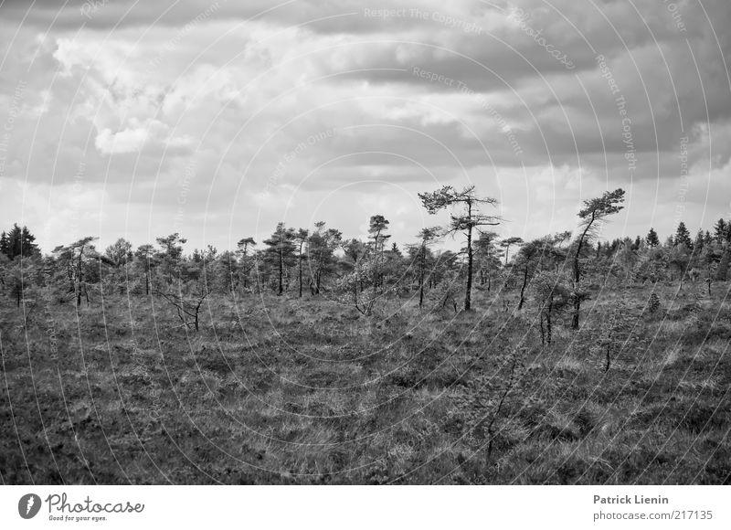 Schwarzes Moor Natur alt Himmel Baum Pflanze Wolken Wald dunkel Herbst Landschaft Luft Stimmung Wind Wetter Umwelt nass