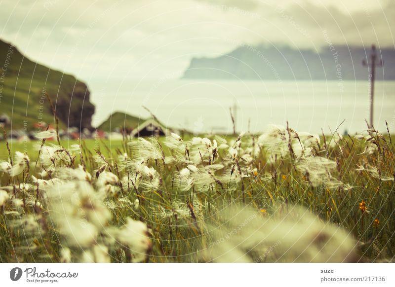 Wolle wa ... Insel Umwelt Natur Landschaft Pflanze Wolken Klima Wetter Wind Nebel Gras Wiese Hügel Felsen Berge u. Gebirge Küste Bucht Fjord Dorf Einsamkeit