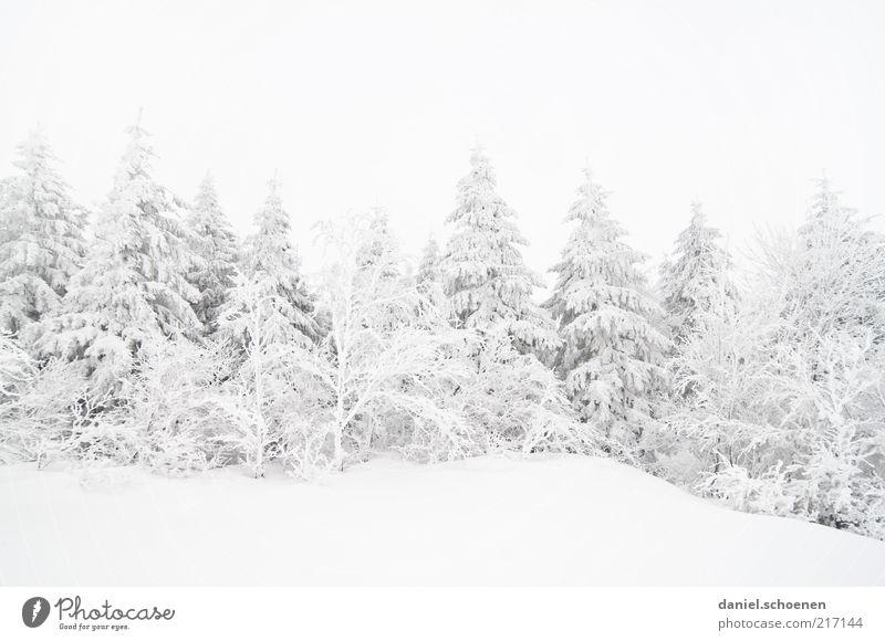 sinkende Schneefallgrenze Winter Klima Klimawandel Wetter Eis Frost Wald hell kalt weiß Schwarzwald Tanne Monochrom Gedeckte Farben Textfreiraum oben