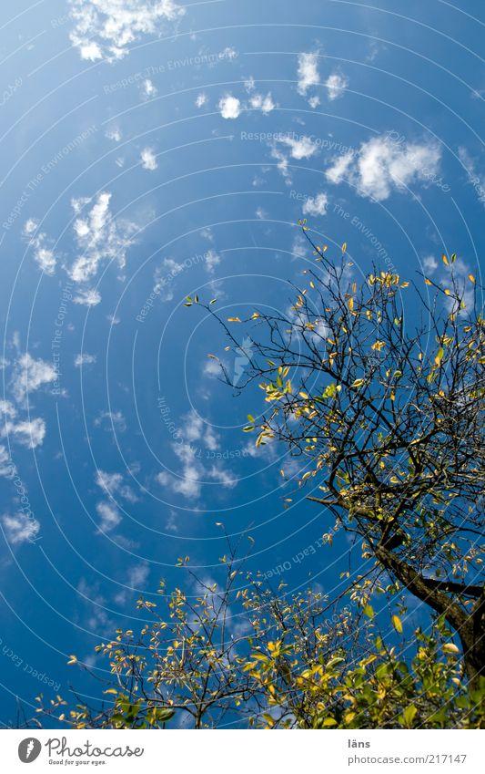 der Herbst kommt Umwelt Natur Pflanze Himmel Wolken Sonnenlicht Schönes Wetter Baum Pflaumenbaum Wachstum blau gelb grün ästhetisch bizarr Baumkrone Blatt