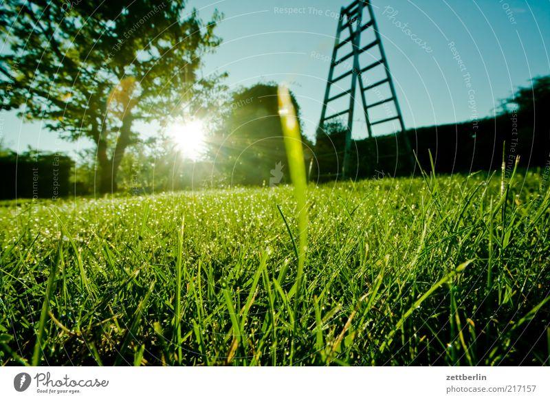A Groovy Kind Of Tautropfenmakro Garten Umwelt Natur Landschaft Himmel Gras Hoffnung Oktober Morgen Leiter Baum Hecke Grundstück Rasen Farbfoto Außenaufnahme